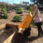 Amelia transports soil to the raised beds.