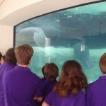 Checking out the manatees from the underwater viewing area.