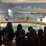 Learning about manatees and their conservation.